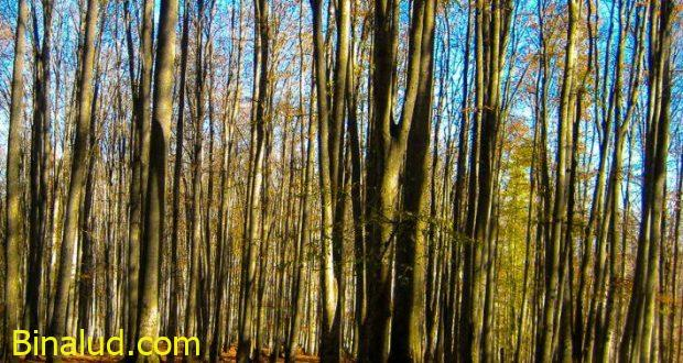 جنگل سنگده